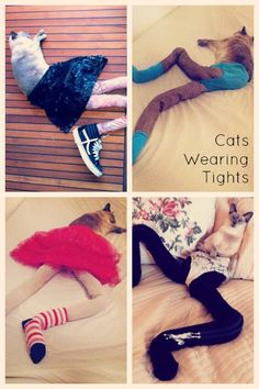 Cat Wearing Tights
