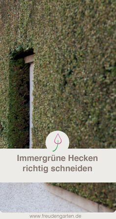 die besten 25 immergr ne hecke ideen auf pinterest schnell wachsende heckenpflanzen hecken. Black Bedroom Furniture Sets. Home Design Ideas