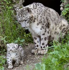 pictures of baby animals funny captions funny humor funny memes animal funny Funny Animals With Captions, Cute Funny Animals, Cute Baby Animals, Animals And Pets, Cute Cats, Funny Captions, Big Cats, Baby Captions, Baby Animals Pictures