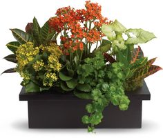 Indoor container garden: An arrangement of Crotons, ivy, nephthytis and Kalanchoes. Needs medium light.