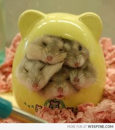 Hamster Stack, :P My own hamster recently passed away... Yet I do miss him every day :(