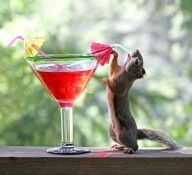 Drinks That Turn You Into Animals