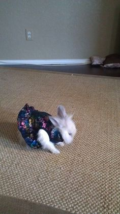Lion head bunny with a dress.