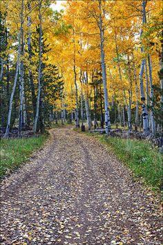 Down the Yellow Dirt Road, Flagstaff   Arizona (by Bob Estrin)