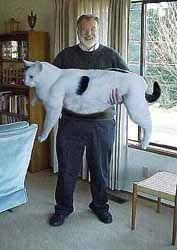 おもしろ猫ちゃん画像(✪ฺܫ✪ฺ )萌え 【面白い画像】 - ねこたちに癒される日々 - Yahoo!ブログ