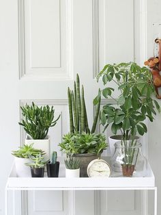 Office Plants There she is, my gang. This month, Judith and Igor from the Urban Jung … Decoration Plante, Plants Are Friends, Office Plants, Spring Party, Interior Plants, Interior Design, Cactus Y Suculentas, Green Life, Green Plants