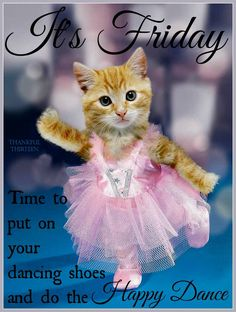 It's Friday Put On Your Dancing Shoes friday happy friday tgif good morning friday quotes good morning quotes friday quote happy friday quotes good morning friday quotes about friday beautiful friday quotes friday quotes for family and friends Animals And Pets, Baby Animals, Funny Animals, Cute Animals, Cute Kittens, Cats And Kittens, Dancing Animals, Cat Costumes, Funny Costumes