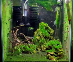 The picture of a perfect tank. Sometimes algae is a very good thing like this Sulawesi shrimp tank by Mette Bind