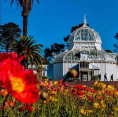 You know spring's here when the flowers are out in full bloom. And what better place to see the flowers than at the Conservatory of Flowers?