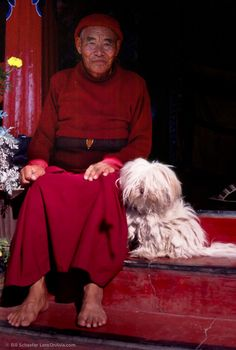 Tibetan Terrier in his natural historical setting...being a companion to the monks high in the Himalayas.