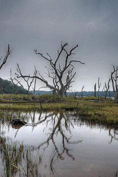 ✮ Old Forest Marsh - South Carolina