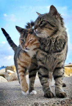 un couple de chats