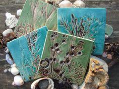 4 Untersetzer Muscheln Fossilien und Algen von damsontreepottery