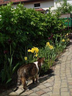 idee für freistehende rankhilfe für clematis im vorgarten gesucht, Garten und Bauen