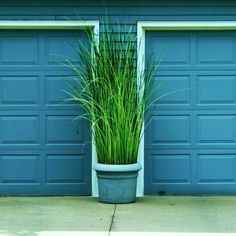 ornamental grass in big pots between garage doors