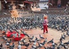Young girl playing with the doves at Jagannath Temple in Durbar Square - Kathmandu, Bagmati Zone, Kathmandu Valley, Nepal. Copyright © 2011 Paul Gordon Pictures