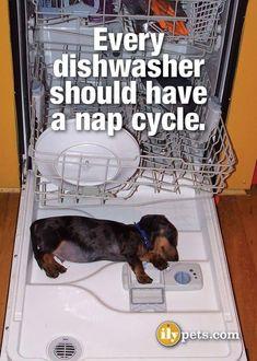 dachshund love                                                                                                                                                                                 More