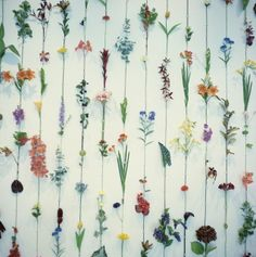 flower wall | umla