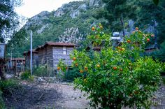 Escape to Olympos Log Cabins, Traveling, House Styles, Home Decor, Viajes, Decoration Home, Room Decor, Wood Cabins, Trips