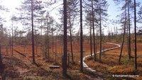 Municipality of Kemijärvi in Finnish Lapland. Forests, Wilderness, Plants, Woods, Planters, Plant, Planting