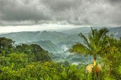 Rainforest. hullabee island. The Geneva Project - Book #TGP #TGP2 www.thegenevaprojectbook.com