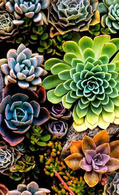 Perk Increase Your Garden With These Handy Tips - Easy Garden Plants - - Kleider - Hintergrundbilder Succulents Wallpaper, Flower Wallpaper, Iphone Wallpaper, Wallpaper Plants, Animal Wallpaper, Colorful Wallpaper, Black Wallpaper, Mobile Wallpaper, Wallpaper Quotes
