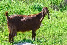 October 8, 2014 Walk Through The Bible, October 8, Daily Walk, David, Horses, Horse