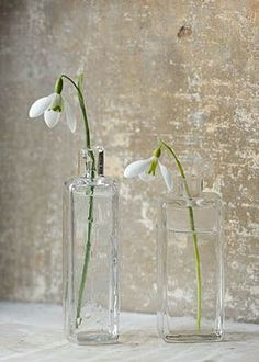 COTSWOLD FARM, GLOUCESTERSHIRE: SNOWDROPS IN GLASS JARS - LEFT TO RIGHT - GALANTHUS 'GALATEA' AND GALANTHUS 'PEG SHARPLES' l Clive Nichols - Library of contemporary fine art and botanical images of flowers and gardens