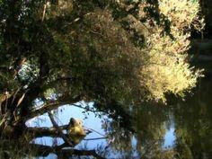 Naturzentrum Thurauen - YouTube