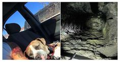 **This sweet girl is looking for a furever home.** Good Samaritans save dog who fell into mine shaft
