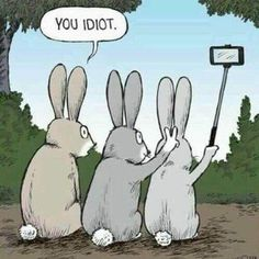 Funny Animal Memes, Funny Relatable Memes, Funny Animals, Funny Jokes, Hilarious, Picsart, Be Like Bro, The Far Side, First Humans
