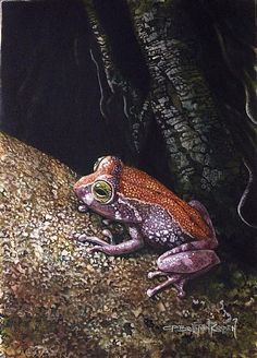 Shrub Frog (Endangered, Unknown Status) ☽☯☾magickbohemian