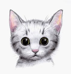 This site contains information about cute drawings of cats. Cute Animal Drawings, Cartoon Drawings, Chat Kawaii, Photo Chat, Cat Drawing, Cat Art, Cute Cats, Draw So Cute Animals, Cats And Kittens