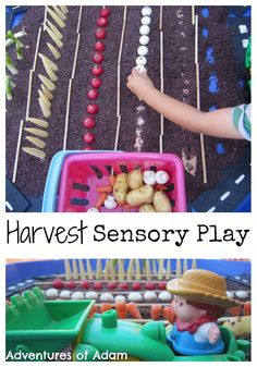 Celebrate Harvest by creating a toddler and preschool friendly Harvest Tuff Spot. A great sensory play activity. Adventures of Adam Harvest Sensory Play Tuff Spot