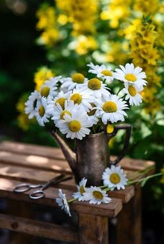 Beautiful Roses, Beautiful Flowers, Daisy Hill, Night Clouds, Yellow Cottage, Good Morning Greetings, Photo Bouquet, Blurred Background, Flowers Nature