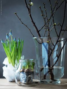 muscari of blauw druifje Interior Blogs, Interior Plants, Spring Flowering Bulbs, Spring Bulbs, Garden Power Tools, Danish Interior, Deco Floral, Bulb Flowers, Spring Flowers