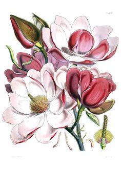 Купить цветы в кургане магнолия купить саженцы розы в виннице