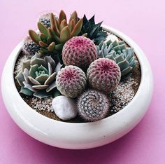 Vintage pots bursting with beauty. #catus. #succulent #cacti