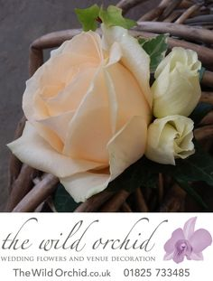A peach Avalanche rose and cream lisianthus buttonhole is complemented with variegated ivy.