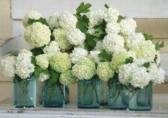 nothing says cottage like mason jars with hydrangeas!
