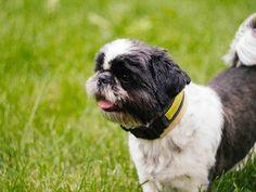 Adorable Canine Cute Dog