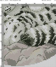 tigres-blancos-5.jpg (726×866)