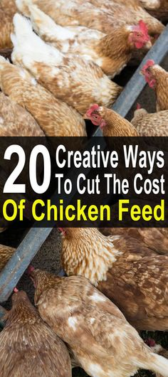 342 Best Farm Ideas Images On Pinterest Farmhouse Chicken Coops