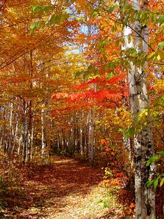 Fall in Northern Ontario, Canada