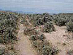 Oregon Trail Ruts near Baker City, Oregon