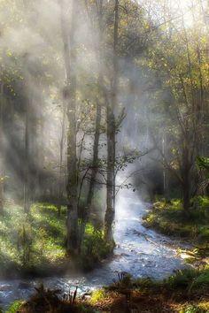 Fog & Sunlight      Hokkaido Japan