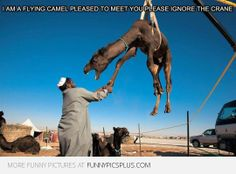 Pleased To Meet You - funny pictures - funny photos - funny images - funny pics - funny quotes - funny animals @ humor Funny Images, Funny Photos, Camelus, Please To Meet You, Tecno, Best Day Ever, Meeting New People, Laughing So Hard, Just For Laughs