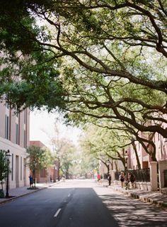 charleston, sc {beautiful trees}