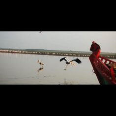 Blog about travel to beautiful birds sanctuary at Bhigwan. Where you can watch a wide range of local and migrant birds like flamingos and Osprey.