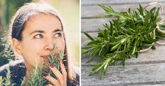 Rosemary is a fragrant herb that is evergreen and an easy addition to your landscape, kitchen and medicine cabinet. http://articles.mercola.com/sites/articles/archive/2017/09/01/growing-rosemary.aspx?utm_source=dnl&utm_medium=email&utm_content=art2&utm_campaign=20170901Z1&et_cid=DM156571&et_rid=36208785